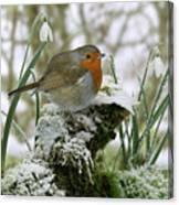Robin And Snowdrops Canvas Print