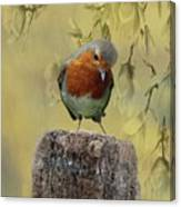 Robin Bird Canvas Print