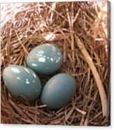 Robin Eggs Canvas Print