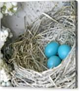 Robin Eggs In A Wreath Canvas Print