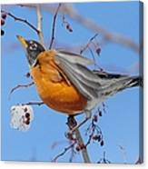 Robin Eying Berries Canvas Print