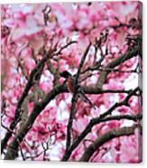 Robin In Magnolia Tree Canvas Print