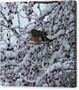 Robin In Snow Canvas Print