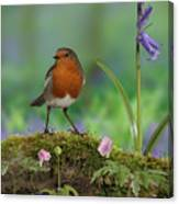 Robin In Spring Wood Canvas Print