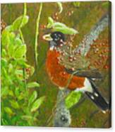 Robin In The Serviceberry Bush Canvas Print