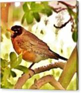 Robin In Tree Canvas Print
