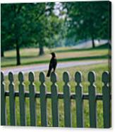 Robin On A Fence Canvas Print