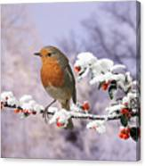Robin On Cotoneaster With Snow Canvas Print