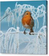 Robin On Frosty Grass Canvas Print