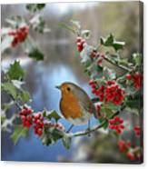 Robin On Holly Branch Canvas Print
