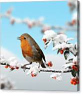 Robin On Snowy Cotoneaster Canvas Print