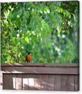 Robin On The Backyard Fence Canvas Print