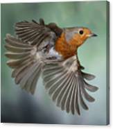 Robin On The Wing Canvas Print