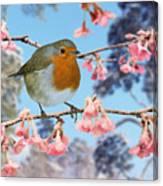 Robin On Winter Flowering Plum Canvas Print
