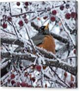 Robin Perched In Crabapple Tree Canvas Print