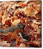 Robin Playing In Fallen Leaves Canvas Print
