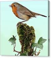 Robin Singing On Ivy-covered Stump Canvas Print