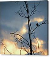 Robin Watching Sunset After The Storm Canvas Print
