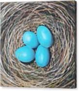 Robin's Eggs Canvas Print