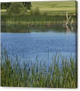 Rochester Wildlife Pond 1 Canvas Print