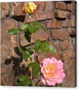 Rock And Rose Canvas Print