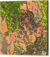 Rock And Shrub Abstract I  Canvas Print