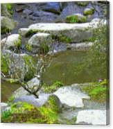 Rock Garden Canvas Print