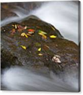 Rock In Water Canvas Print