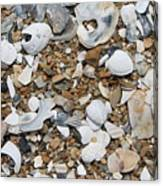 Rock N Shells Canvas Print