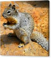 Rock Squirrel Canvas Print