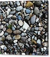 Rocks And Sticks On The Beach Canvas Print