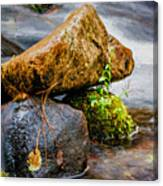 Rocks In The Creek Canvas Print