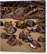 Rocks On The Beach Canvas Print
