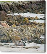 Rocky And Sandy Beach Canvas Print