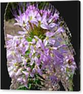 Rocky Mountain Bee Flower Canvas Print