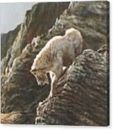 Rocky Mountain Goat Canvas Print