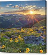 Rocky Mountain National Park Summer Sunflowers Pano 1 Canvas Print