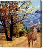 Rocky Mountain Trail Canvas Print
