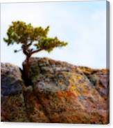 Rocky Mountain Tree Canvas Print
