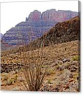Rocky Slope Grand Canyon Canvas Print