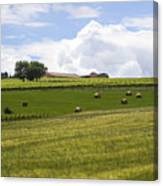 Rolling Green Hills With Trees Canvas Print