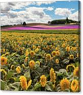 Rolling Hills Of Flowers In Summer Canvas Print