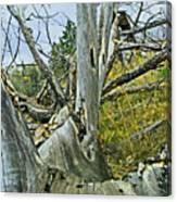 Rolling Log Canvas Print