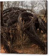 Rolls Of Barbed Wire Canvas Print