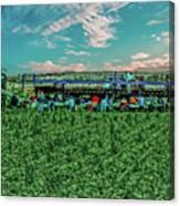 Romaine Lettuce Harvest Canvas Print