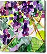 Roman Grapes Canvas Print