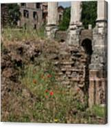 Roman Poppy Canvas Print