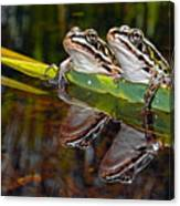 Romance Amongst The Frogs Canvas Print