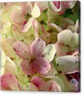 Romance In Pink And Green Canvas Print