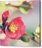 Romancing Spring II Canvas Print